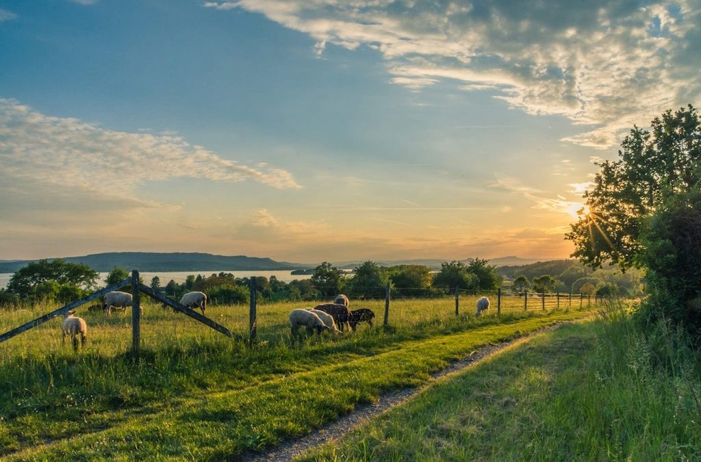 The difference between a farm, a ranch, and a luxury ranch for sale