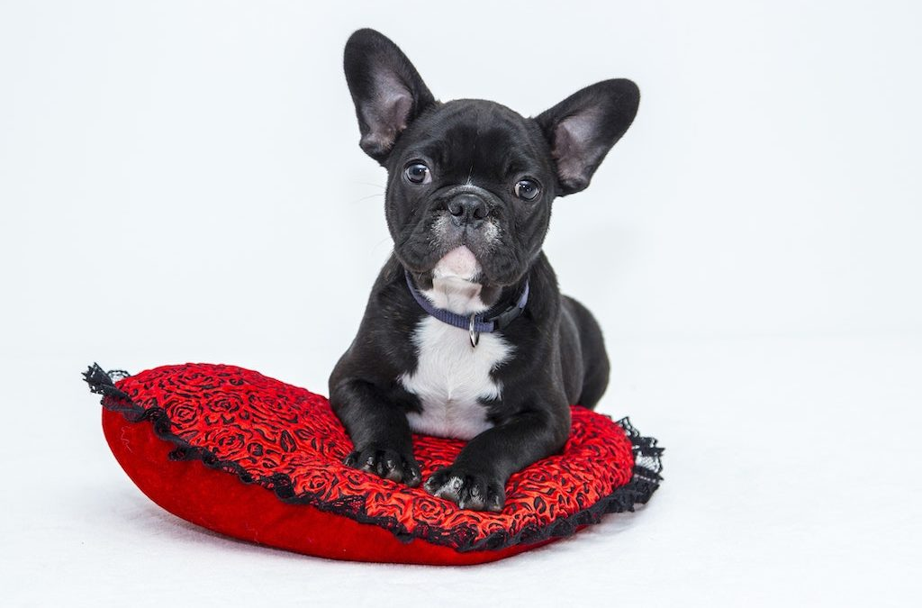 What Every Pet Owner Needs to Know About DCM and Pet Food