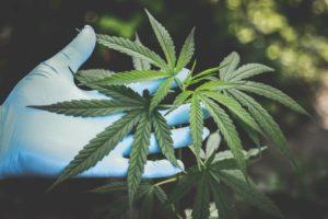 cannabis med