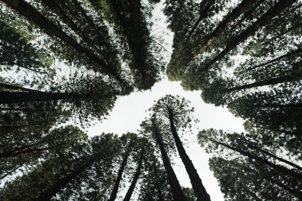 Why You Should Support a Reforestation Project